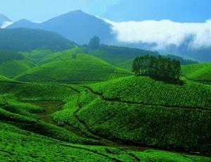 munnar hill station kerala tea plantations